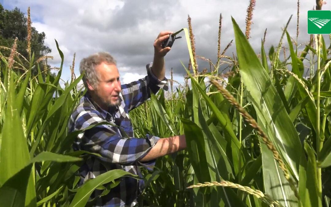 De percelen van het Maismeetnet draaien dit jaar voor het eerst mee metFieldscout